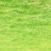 cow_grass_2